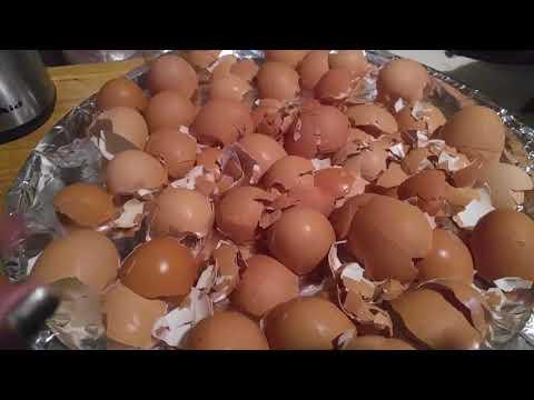 Cascara de Huevo para Eliminar el Dolor de Huesos y Articulaciones.