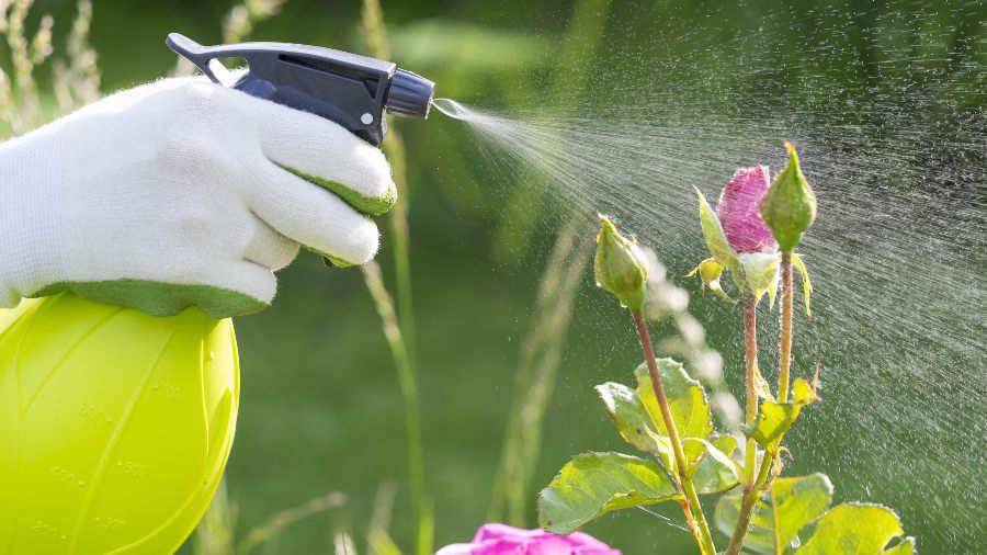 Estos son los mejores métodos para deshacerse de los insectos de las plantas y en el jardín.